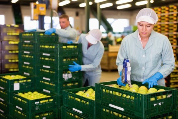 Industry Food Warehouse Workers