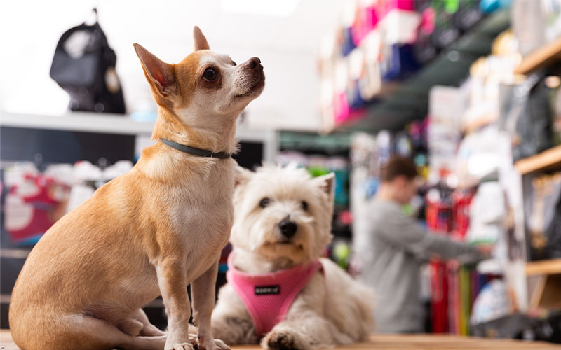 Learn How e-Commerce Fulfillment Groomed Petco for Success